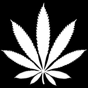 The current Canadian marihuana laws are not black and white.